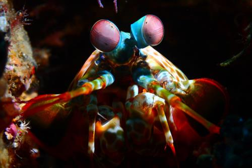 Amazing Underwater Creatures I Photographed While Diving In Indonesia