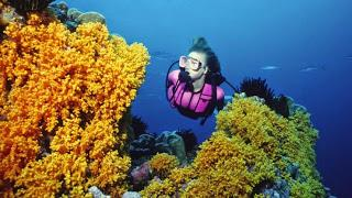 Scuba Diving Is A Wonderful Sport: Just Eliminate The Risks