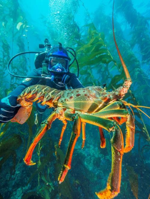 2018 Channel Islands Dive Trip