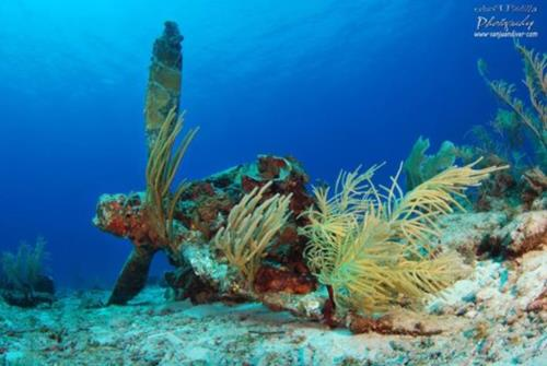 The Motor Reef Wreck, La Parguera PR