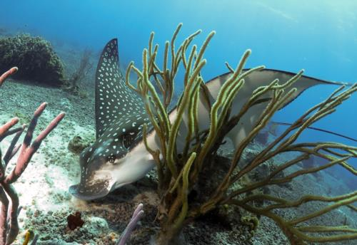 AWESOME dive encounters in Cozumel this week!
