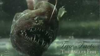 True Facts:The Anglerfish