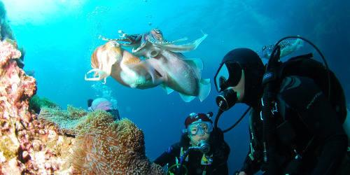 SCUBA Quiz! What does SCUBA stand for?