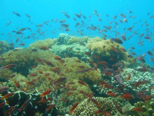Mindoro, Puerto Galera & Verde Island