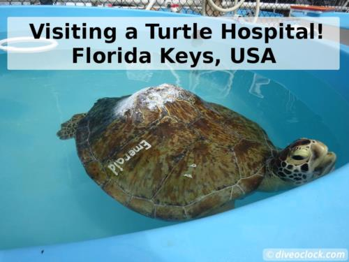 Visiting a Turtle Hospital in Florida!