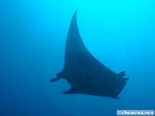 Diving Komodo National Park, Indonesia!