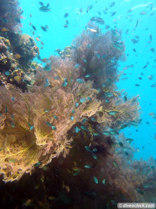 Dive destination: Koh Phi Phi, Thailand!