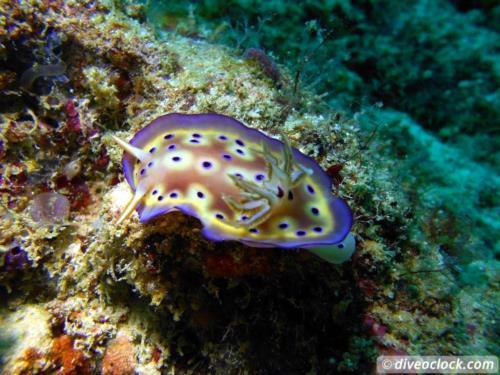 Dive destination: Sipadan, Mabul & Kapalai - Malaysian Borneo!