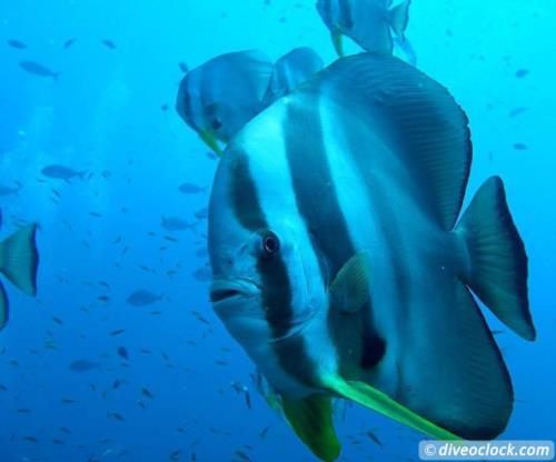 Dive destination: Richelieu Rock, Thailand!