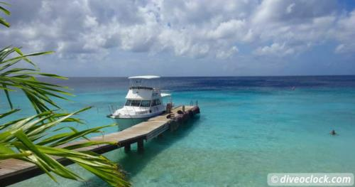 Exploring The Best Dive Sites of Curaçao, Dutch Caribbean!