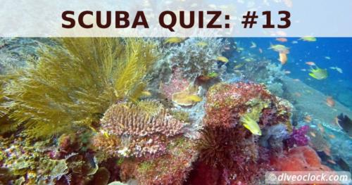 SCUBA QUIZ: The Coral Triangle!