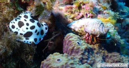 The Mediterranean Sea at its Best: Islas Hormigas Marine Reserve!