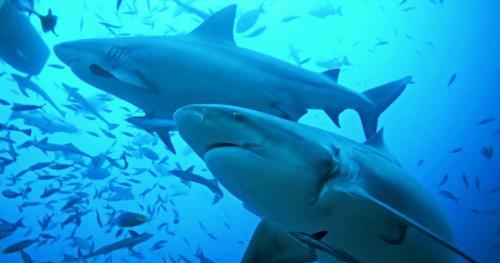 SCUBA QUIZ: Shark Facts!