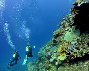 Tips for diving in Croatia