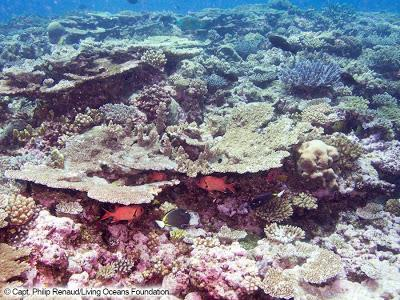 Living Ocean Foundation: a 6-year coral reef expedition with hopes of making a difference