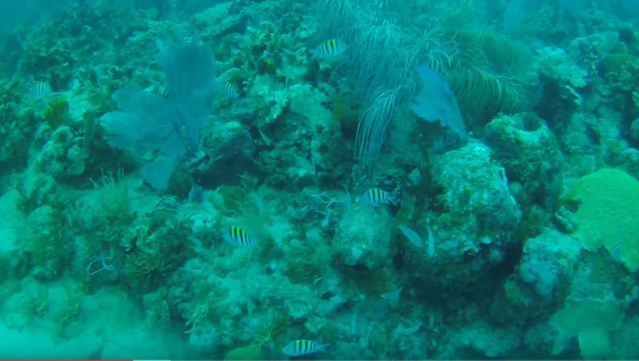 Runaway Bay - Coral