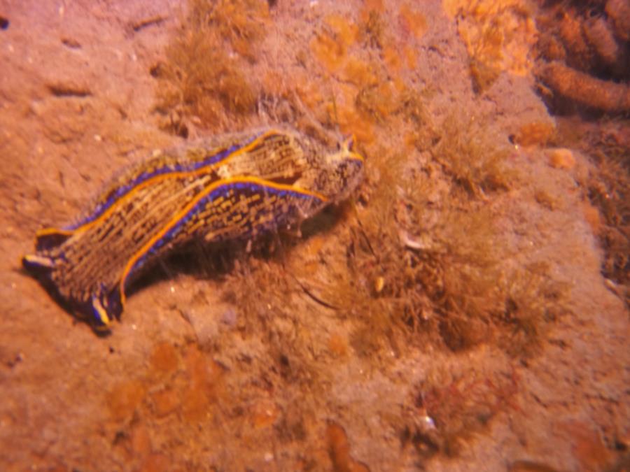 LaJolla Shores - Slug