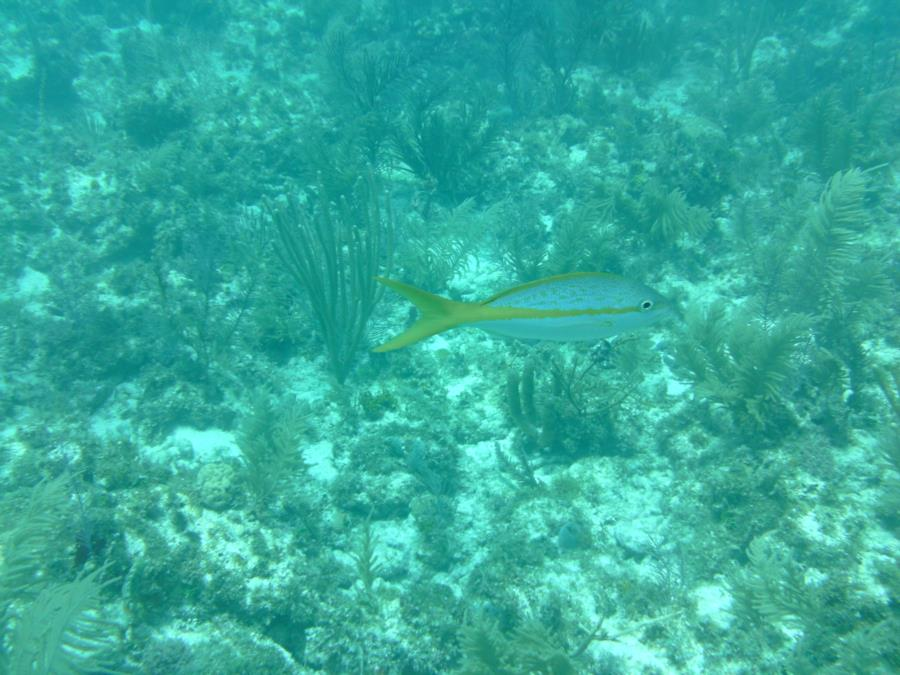 Alexander's Wreck - Fish4