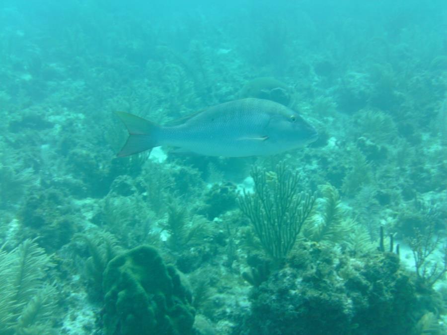 Alexander's Wreck - Fish7