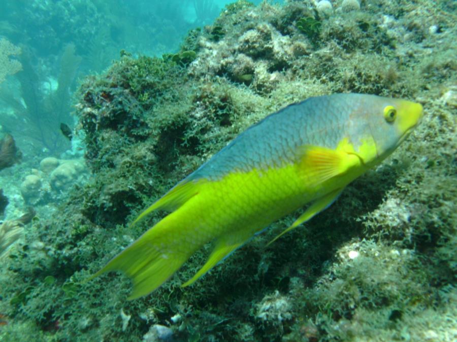 Alexander's Wreck - Fish8
