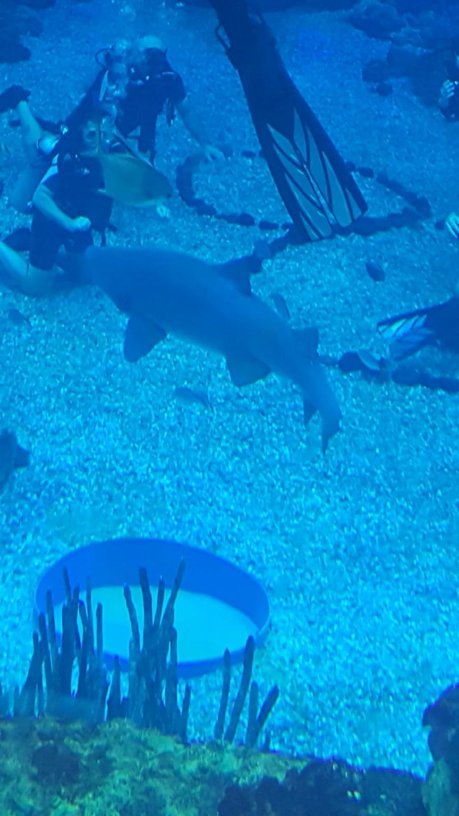 Epcot DiveQuest - Walt Disney World - Living Sea - Dive quest