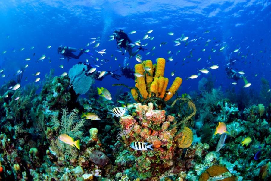 Aquarium reef cayman islands for Deep sea fishing grand cayman