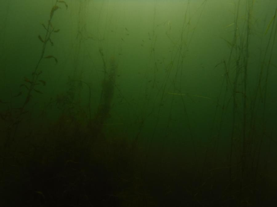 Baptist Lake - Feeling green at Baptist Lake, MI