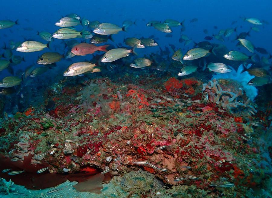 Whitehill Reef - Whitehill Reef