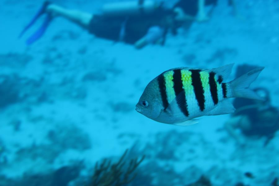 Tormentos Reef - Tormentos 1