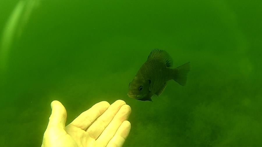 Wheeler Branch Lake - friendly perch
