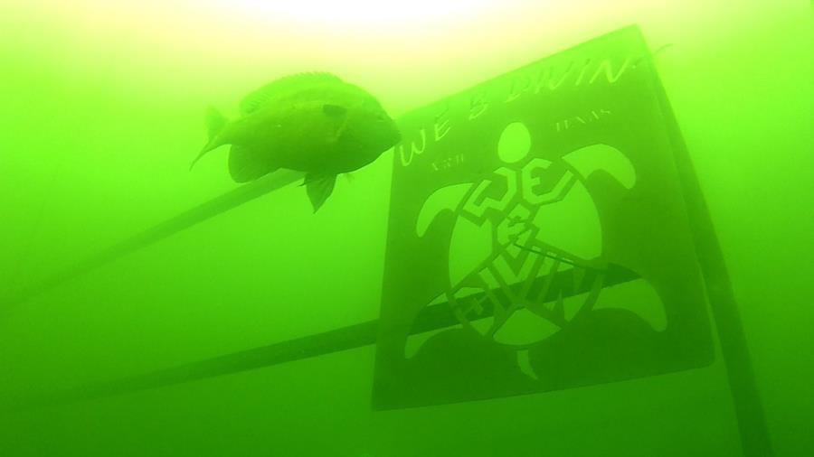 Wheeler Branch Lake - Platform Guard Fish