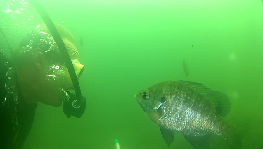 Wheeler Branch Lake - fishy talk