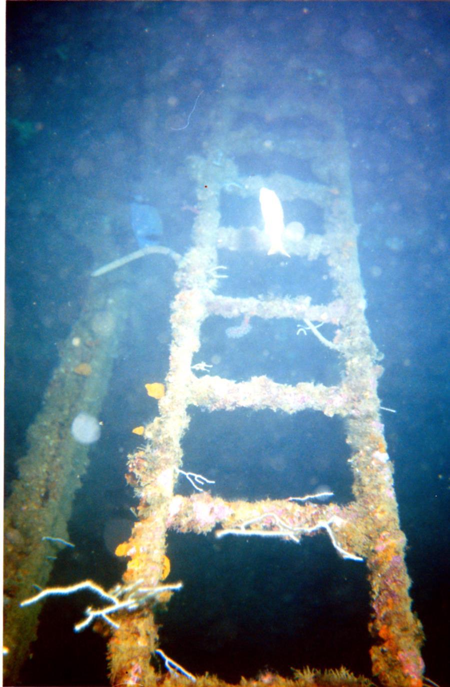 Spanish Barges - wrecks