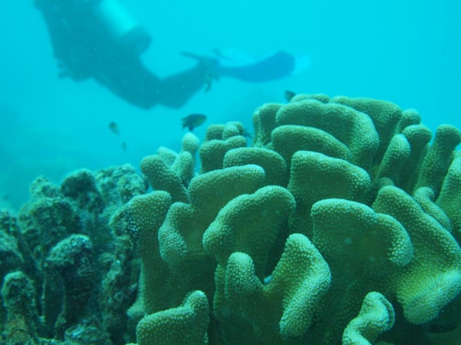 Koloa Landing - Christine over reef
