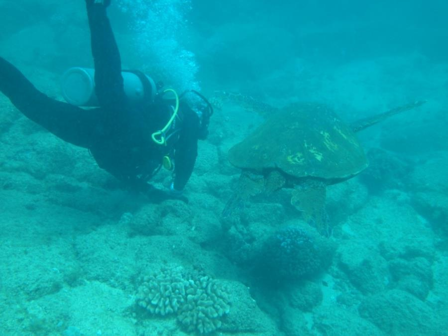 Koloa Landing - Turtle with Greg, no not that Greg