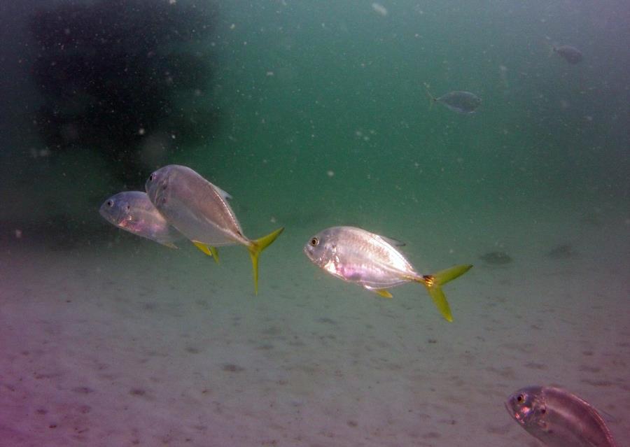 Navarre Marine Sanctuary - Sea Turtle