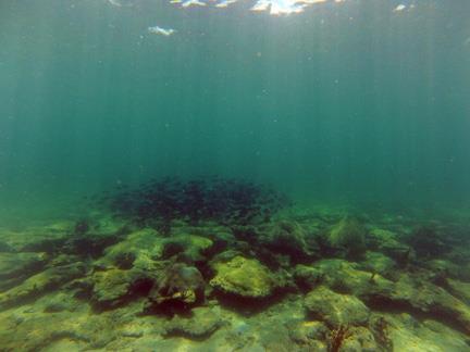 Barracuda Reef - CR_GOPR0002_web.jpg