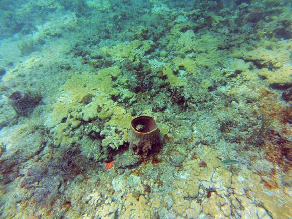 Barracuda Reef - CR_GOPR0170_web.jpg