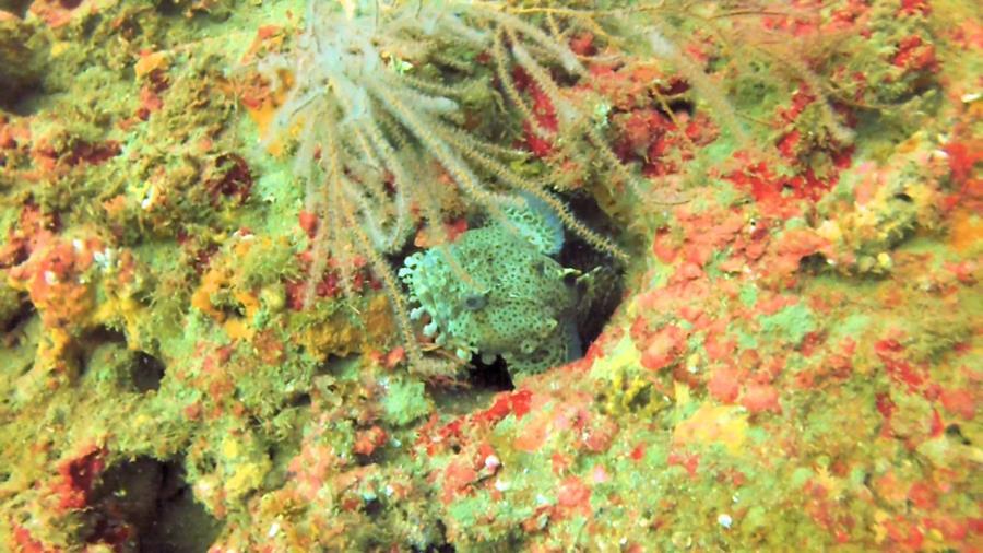 Amberjack Rocks (a.k.a. Amberjack Reef) - Photo uploaded by ImagesbyWard (Amberjack Rocks 5.jpg)