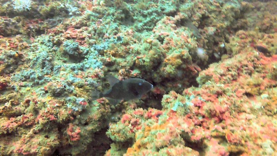 Amberjack Rocks (a.k.a. Amberjack Reef) - Photo uploaded by ImagesbyWard (Amberjack Rocks 6.jpg)