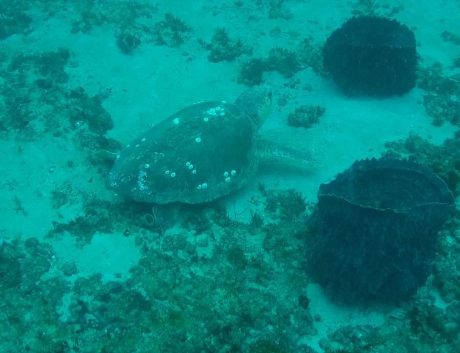 Area 29 - Sea Turtle