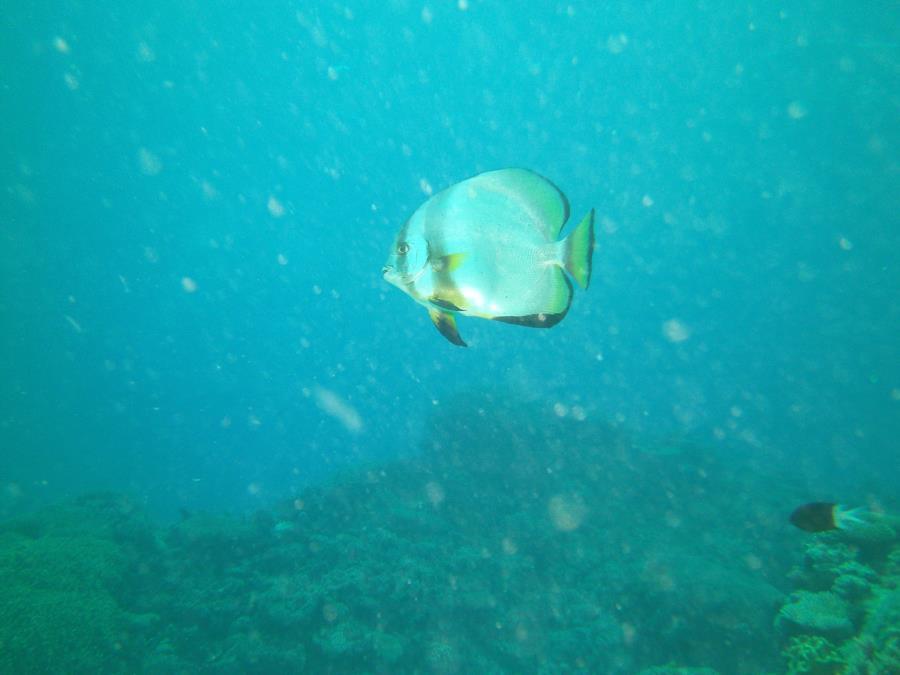 Great Barrier Reef- Cairns AUS - not sure