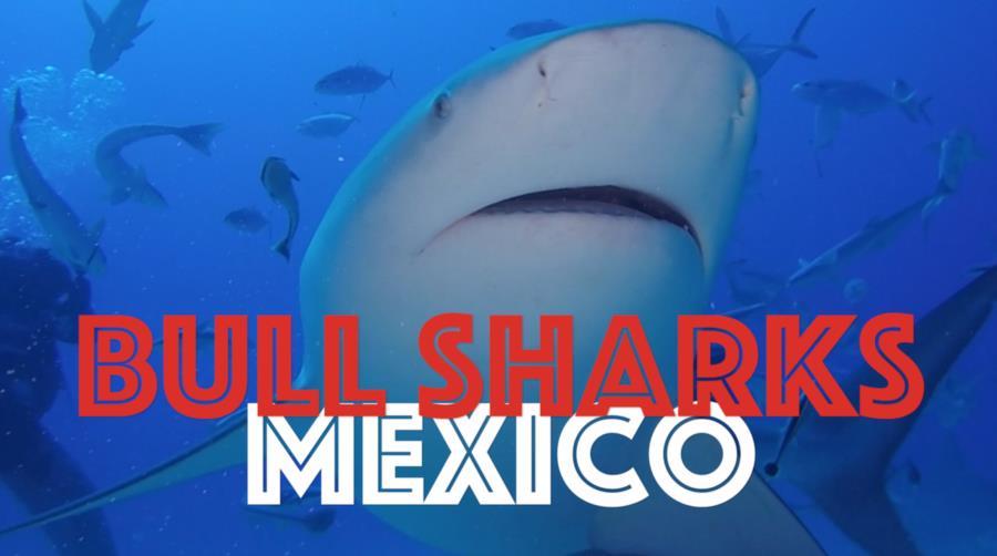 Shark Arena - Bull Sharks