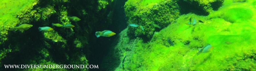 Cenote Ponderosa a.k.a. Jardin Del Eden - Cenote Ponderosa/Jardin Del Eden