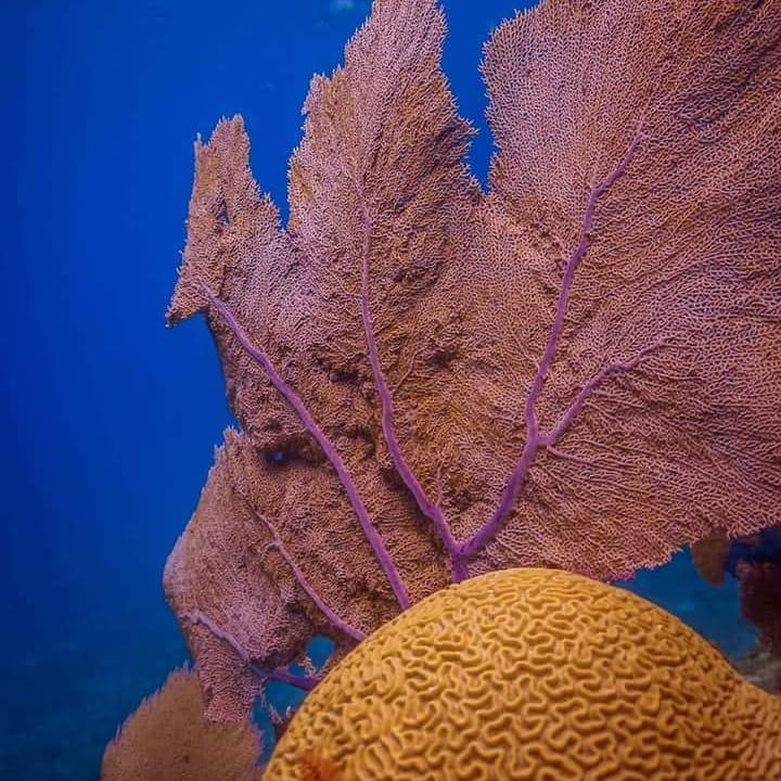 Grand Cenote Mexico - Amazing underwater nature