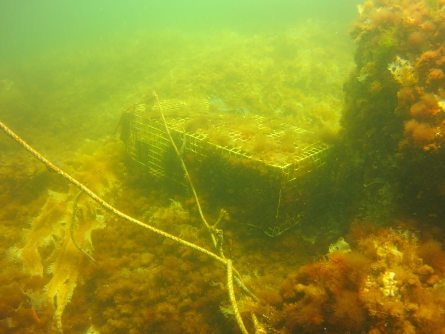 Duck Island-Jimmies Ledge - Lobsterbox