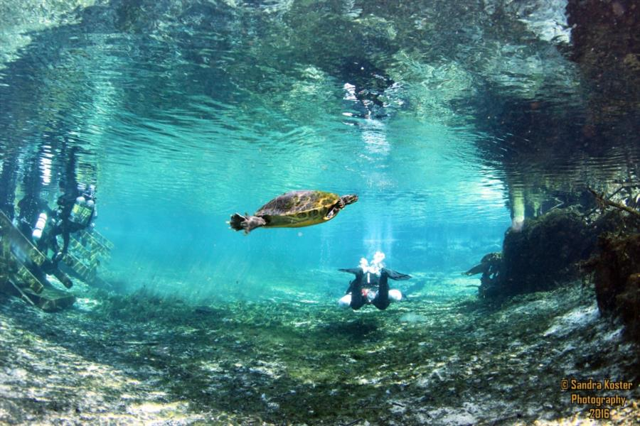 Ginnie Springs - Going down the run