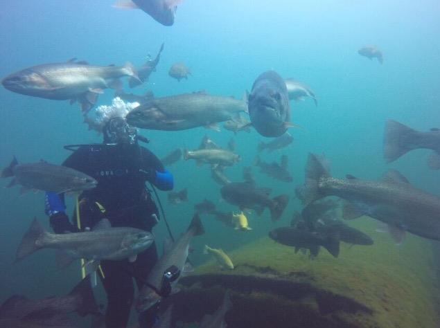 Gilboa Quarry - Fish everywhere