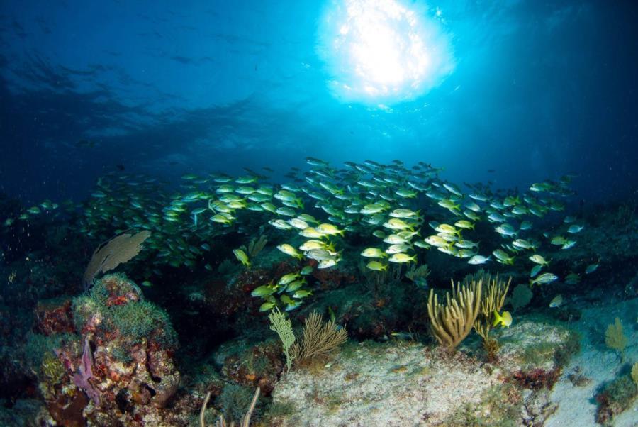 Sunburst, Manchones Reef