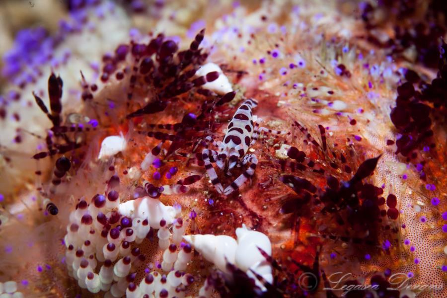 Life Inside Sea Urchin